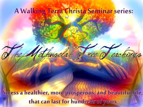 Methuselah Tree Training at Walking Terra Christa