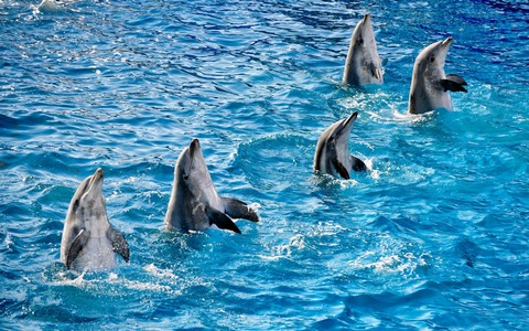 dolphins-fb